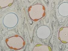 Marmorpapier #6084